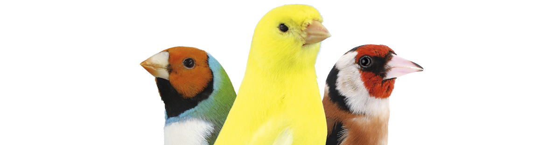 Aves de jaula